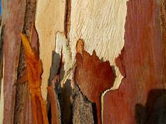 Eucalyptus Bark 2 (vickilw) Tags: free bark eucalyptus week25 7daysofshooting thoroughlyabstractthursday