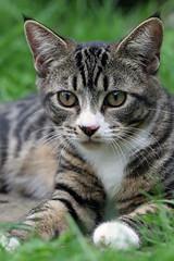 Megan (DanGB) Tags: pet 20d cat canon kitten feline canon20d tabby canoneos20d 70300 ef70300mmis
