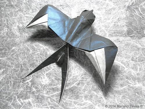 Swallow Mariano Zavala B A Photo On Flickriver