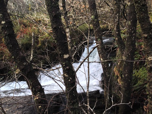 River roars