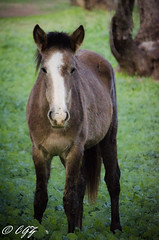Eventide (Song River- CowGirlZen Photography) Tags: arizona horses white lake nature water river grey bay nikon salt wildhorses foal yearling arizonahighways cowgirlzenphotography