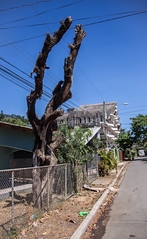 Dead Tree in Nosara, Costa Rica (ChrisGoldNY) Tags: travel trees latinamerica costarica forsale viajes albumcover bookcover bookcovers centralamerica albumcovers licensing nosara guanacaste nicoya chrisgoldny chrisgoldberg chrisgold chrisgoldphoto chrisgoldphotos
