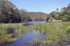 Hacking River (everyday sh_ter) Tags: park beach forest sydney waterfalls kookaburra wattamolla garie royalnationalpark audley stanwell hackerriver