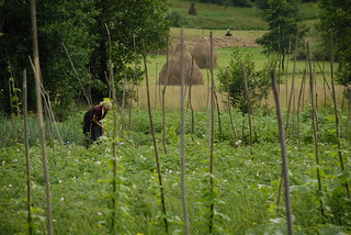 Field & Woman, Rumania