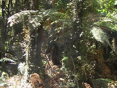 Otherworldly Temperate Rainforest