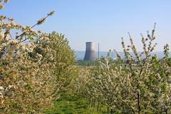 ckuchem-1223 (christine_kuchem) Tags: streuobstwiesenweg streuobstwiese streuobst wiese obstbaum frhling frhjahr blte bltezeit mhlheimkrlich kernkraftwerk stillgelegt obstbume