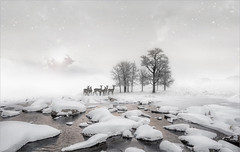 Gathering (Jean-Michel Priaux) Tags: paysage landscape nature white snow tree trees ice winter cold photoshop painting poetic poetry wild paintingmatte