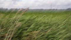 (juli_ei) Tags: fhr feld icm strommast gras canon eos6d 6d ef2470mmf28lusm sommer wolken wind windig intentionalcameramovement