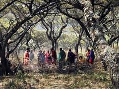 DSCN1254 (David Bygott) Tags: ngorongorocrater nca africa tanzania maasai misigiyo warrior moran olpul
