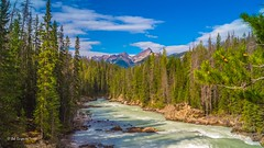Kicking Horse River (Bob C Images) Tags: field britishcolumbia canada river water stream creek mountains trees