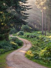 Meander (Damian_Ward) Tags: damianward photography damianward newforest hampshire slodeninclosure woodland track winding
