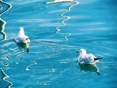 Couple. (adrianaatrio) Tags: barcelona spain espaa travel water agua beauty nature natural animals