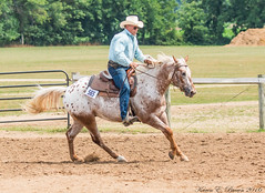 Appaloosa (BirdFancier01) Tags: reining horse equine gallop show arena ring appaloosa competition