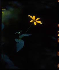 Wildflower (Pali K) Tags: mamiya rb67 pros flowers wildflower nature provia fujifilm jobo cpp2 tetenal e6 ishootfilm istillshootfilm i love film is awesome photography dead color slide evertsmart pro scitex plant flower outdoor depth field