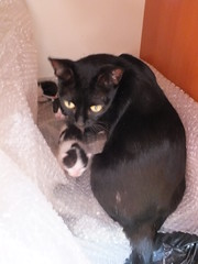 New born cats (CyberMacs) Tags: istanbul turkey trkiye cat cats kitty cute