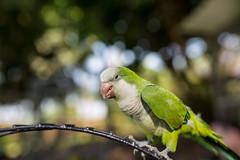 ZON_0125 (Zonnie) Tags: nikon d600 sigma 35 f14 sb700 dof bokeh closeup parrtos birds wildlife animals