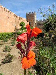Rabat kasbah des Oudaya_0550 (JespervdBerg) Tags: holiday spring 2016 africa northafrican tamazight amazigh arab arabic moroccanstyle moroccan morocco maroc marocain marokkaans marokko rabat qasbah kasbah qasba oudayas oudaias