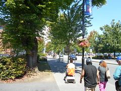 Trees along Lougheed Highway & 224th Street: Maple Ridge, British Columbia 2016 (DeepRoot Green Infrastructure) Tags: mapleridge britishcolumbia silvacell soil urbantree streettrees cell streetscape