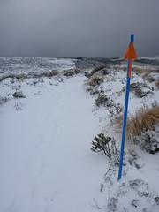 Splashes of colour (Magryciak) Tags: 2016 whakapapa white snow cold frozen ice colour newzealand northisland tongariro panasonic lumix winter walk trip tramp trekking trek trail track outdoors outdoor adventure mountain