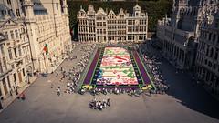 Le tapis de fleurs de la Grand-Place... mis  l'honneur  Mini-Europe ! (Gilderic Photography) Tags: grandplace bruxelles brussels brussel minieurope miniature vacation canon 500d gilderic