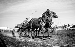 From the horse show (toddrappitt) Tags: vegetarian6 blackandwhite bw animals horseandcarriage horseshow horse september ontario collingwood exhibition greatnorthernexhibition t4i rebel canon