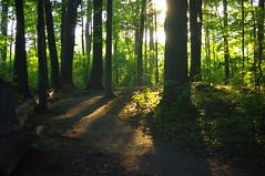 morning walk (thomas.erskine) Tags: 20160906imgp1887teelev 2016 sep fall morning ottawa mud lake trees sun shadows