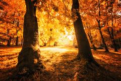 Die Sulen des Herbstes (Gruenewiese86) Tags: harz herbst wald wlder wlder herbstlich licht sonnenlicht sonnenschein gold goldig gelb morgen morgens park stadtpark wernigerode sachsenanhalt jahreszeit baum bume sonne gegenlicht spazieren umwelt landschaft landschaftlich drausen laub laubfrbung bewegung bewegen harzer warm sonnig wetter tageszeit frbung lustgarten natur natrlich