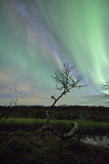 """Rainbow in the dark"" (Ronny rbekk - http://arcticphotography.no) Tags: specland flickrsbest auroraborealis northernlights nordlys norrsken arctic norway norge nordnorge norwegen night nightphotography ronnyrbekk ronnyrbekkphotography  aurora harstad troms northernnorway landscape norwegian norsk norwegianphotographer fotograf visipix nikonafsnikkor1424mmf28ged nikon iamnikon nikonphotography"