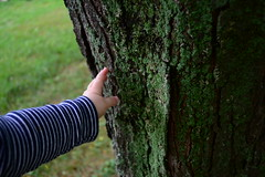 (ktLaurel) Tags: baby hand touch tree moss lichen green outdoors senses leaning bark discover