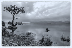 The Lone Tree of Loch Chon (don't count the pixels) Tags: scotland trossachs trossachsnationalpark lochchon longexposure slowshutterspeed water lakes trees tinted duotone silverefexpro