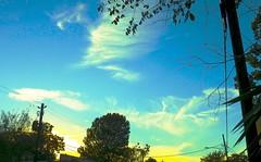 (George Lechtov) Tags: p900 coolpix nikon clouds cirrus urban sunset yellow blue sky