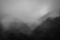 cleavage (Chris Huddleston) Tags: foggy tree steep layers bw fog colombia blackandwhite mountain valley