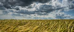 Harvest Time (stuartgibbons95) Tags: sky clouds sussex uk