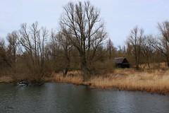 """Drimmelen: National Park """"De Biesbosch"""" ( Corry ) Tags: nationalpark biesbosch waterworld nature"""