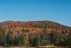 VT Foliage 2 (Nsharp17) Tags: nikon nikonfe film 35mm kodak ektar ektar100 foliage red orange fall autumn vermont