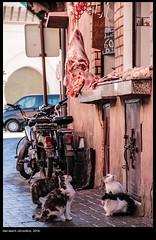 Marrakech (buiobuione) Tags: city travel blue winter light sunset summer sky people streetart storm color green castle nature yellow architecture sunrise landscape graffiti village bright cloudy market decay bluesky morocco marocco marrakech springtime travelphotography ancientcity fullcolors buiobuione