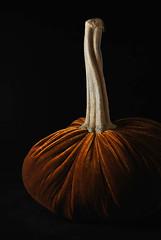 Thanksgiving 2014 (marionchantal) Tags: thanksgiving orange usa holiday chicago pumpkin illinois velvet 2014 nikond3000 chicagonikonians