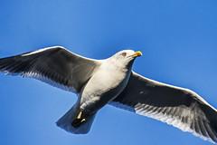 Beady Eye. (Cycling Saint) Tags: birds leicester nikond600nikkor70300f456