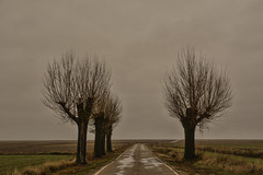 Jiloca 3  ( Diciembre 2014 ) (carlosjarnes) Tags: nikon diciembre aragón jiloca