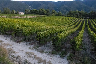 Menerbe Vineyard