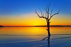 Tree in ice (Kansas Poetry (Patrick)) Tags: sunset lake kansas lawrencekansas clintonlake patrickemerson vividstriking patricknancyforever