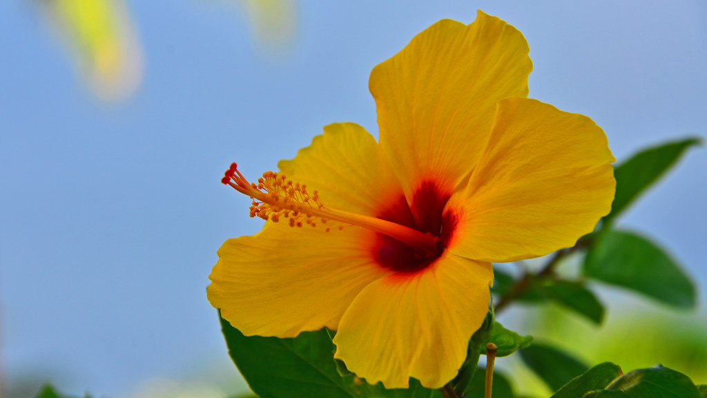 The World S Newest Photos Of D7000 And Oahu Flickr Hive Mind
