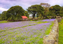 Emsworthy Blues (Robgreen13) Tags: uk blue trees red green nature wall bluebells barn canon landscape countryside spring cloudy farm rustic devon dartmoor isolated 650d emsworthy iplymouth yahoo:yourpictures=landscape