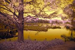 Boats On Waterfowl Lake In Showa Memorial Park (aeschylus18917) Tags: park lake nature japan landscape ir boats pond nikon scenery surreal infrared  d200 nikkor swanboats 1870mm tachikawa rowboats waterfowllake  showamemorialpark  showakinenkoen   danielruyle aeschylus18917 danruyle druyle