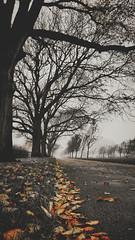 autumn trees blackandwhite bw orange nature leaves pov... (Photo: Mark.L.Sutherland on Flickr)
