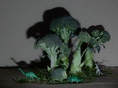 La fort de Brocoliande ! (marycesyl) Tags: brocolis brocoliandefort