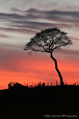 Afterglow (ajp~) Tags: tree silhouette clouds canon fence landscape scotland northberwick lonetree 6d eastlothian sunse canon70300mmf456l alanjohnstone wwwalanjohnstonephotographycom