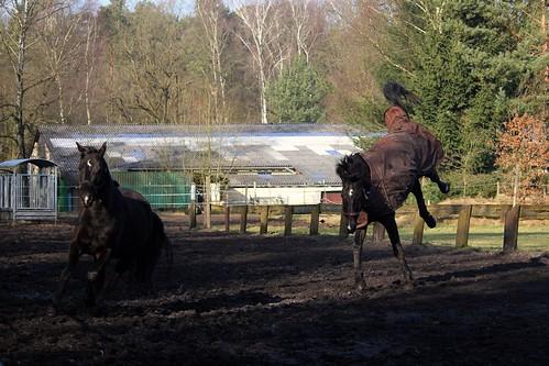 "Pferde im Winter 2015 • <a style=""font-size:0.8em;"" href=""http://www.flickr.com/photos/69570948@N04/16518199661/"" target=""_blank"">Auf Flickr ansehen</a>"