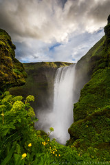 Skogafoss Sunrise (Jim Patterson Photography) Tags: morning flowers summer portrait green beautiful vertical sunrise landscape waterfall iceland europe southern southcoast epic yellowflowers skogafoss skogar dramaticclouds largewaterfall jimpattersonphotography jimpattersonphotographycom seatosummitworkshops seatosummitworkshopscom