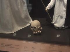 A Small Skull